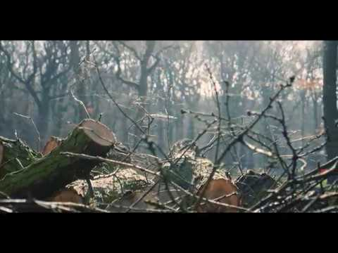 The Woods. Panasonic G7 Footage From Belfairs