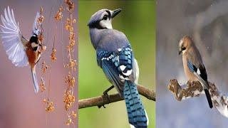 worldwide beautiful birds||Beautiful birds in different colours||Beautiful rivers edge