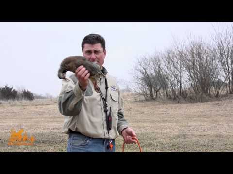 D.T. the Dog Training Video 8 | Introducing Birds to Dogs