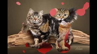 Американский бобтейл - кошка для детей