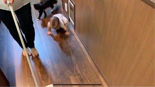 赤ちゃんと一緒に床拭き掃除の後を付いてくる猫 ノルウェージャンフォレストキャット Cat that comes after cleaning the floor with a baby