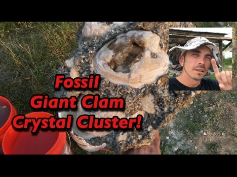 Huge Fossil Calcite Clam Crystal Cluster @ FT. Drum Florida  - #MiningAmerica Ep22A - March 2017