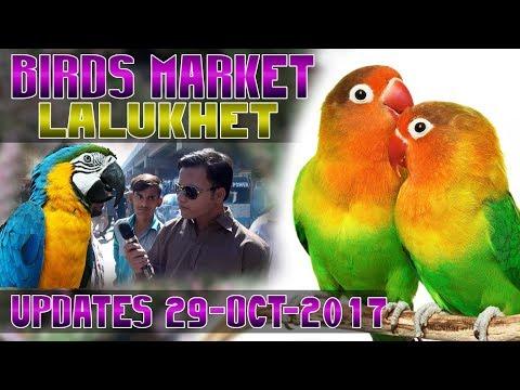 Birds Market Lalukhet latest Updates 29-10-2017 Jamshed Asmi Informative Channel In (Urdu/Hindi)