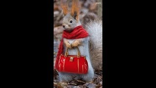 Funny animals. Funny character ||Funny Animal Pictures || Nowrin Sadia