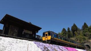 [綺麗な芝桜&桜景色]春の智頭急行線を走る特急&普通列車通過集