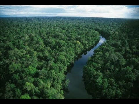 Ecuador Auctioning Amazon to Oil Companies
