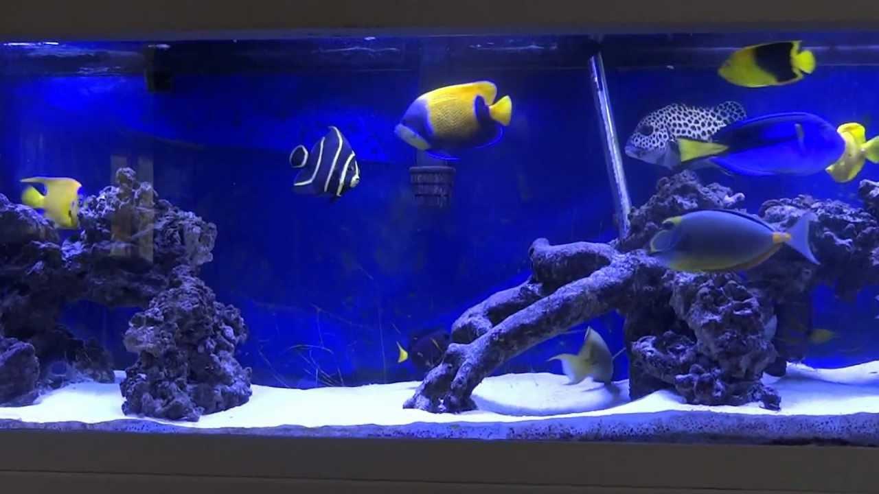 fowlr saltwater tank 5/28/2012 - YouTube