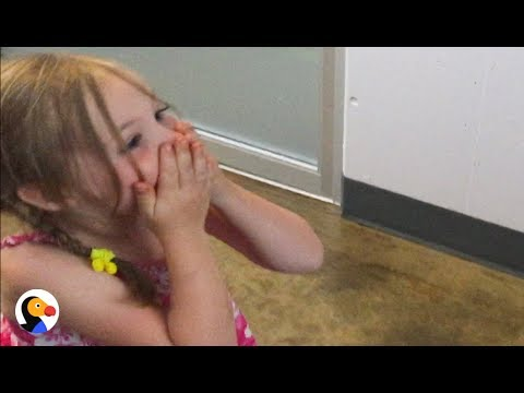Girl Reunited With Her Lost Cat After 3 Years  | The Dodo