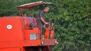 Kombajn Bizon Z056  i pierwsza pszenica   Żniwa 2013
