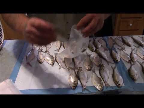 Flash freezing your bait doovi for Flash freeze fish