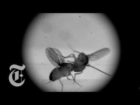 Fight Club for Flies | ScienceTake w/ James Gorman | The ...