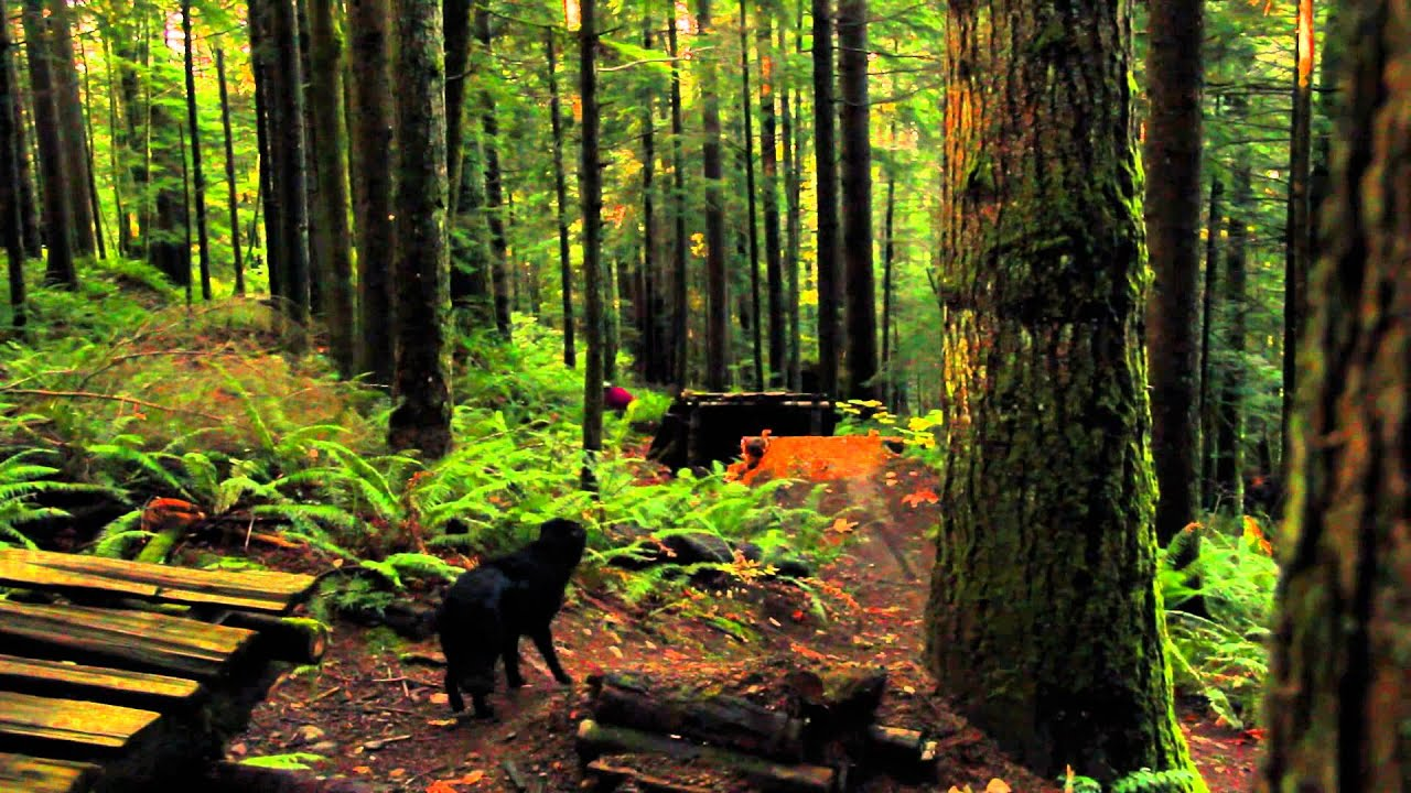 Bing Fall Desktop Wallpaper Into The Dark Fall Mountain Biking In The Pacific