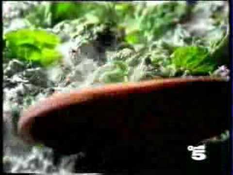 Spot spinaci filanti di 4 salti in padella canale 5 for Cucinare 4 salti in padella