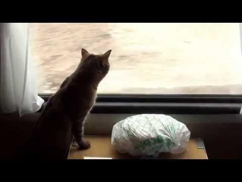 Кошка в поезде: как перевозить летом 2016