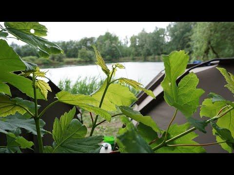 Karpfenangeln am Natursee!