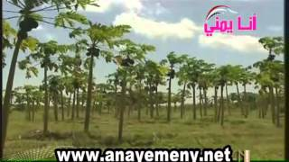 Abyan governorate - Yemen- English- Part 2