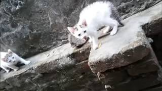 Cat's Cute  Child-HD !!!
