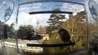 Rspb Window Bird Feeder + Gopro
