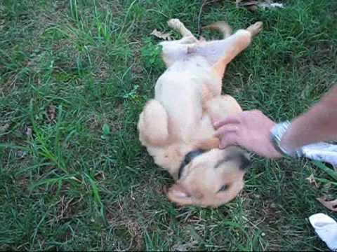 Tucker, Toby & Tanner Good Dog Rescue