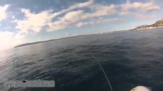Pêches légères au SAKURA L16 SHAD