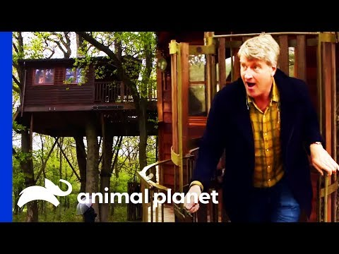 This Innovative Treehouse Has A Fully Mechanical Elevator! | Treehouse Masters