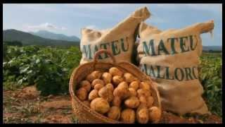 Mateu Export - Histoire de l'exportation de pommes de terre de Majorque