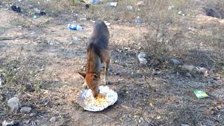 slum dogs | funny dogs | dog | dogs | animal | funny animal | funny videos| pet | country dog