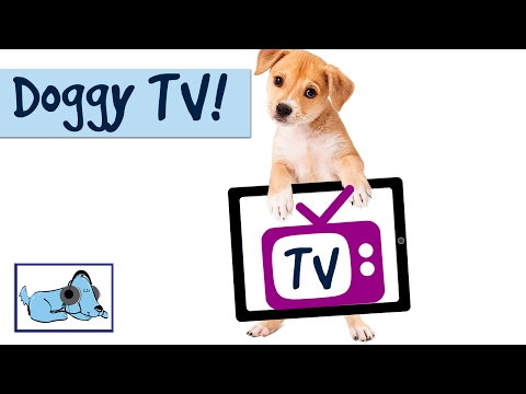TV For Dogs - Relaxing Music for Dogs, Nature Sounds and Nature Footage for Dogs, Videos for Dogs
