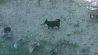 коты и собака. Воронеж, 5 августа 2016
