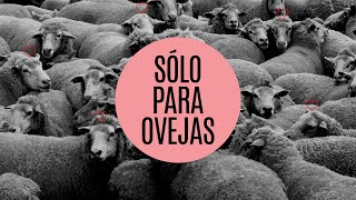 Sólo para ovejas - Iglesia La Gloria de Dios Internacional