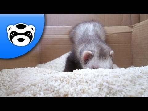 In The Hall of the Ferret Queen