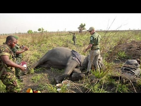 Guards at the Garamba National Park fight for survival of elephants in DRC