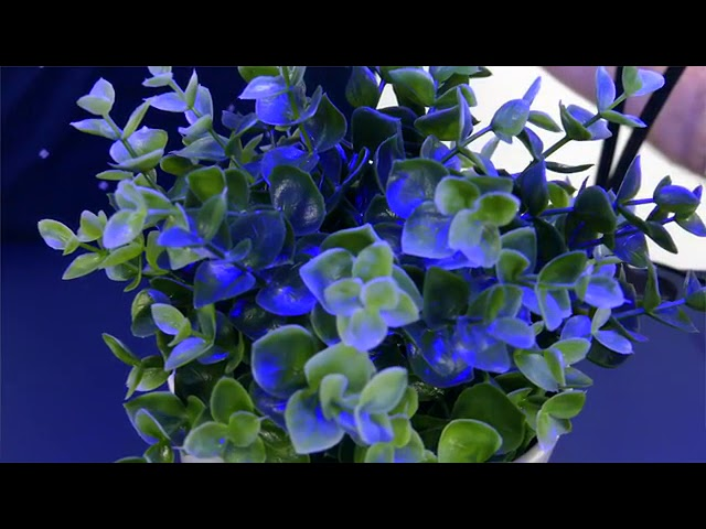 Product Video - Oneamasin Plant Grow Light⠀