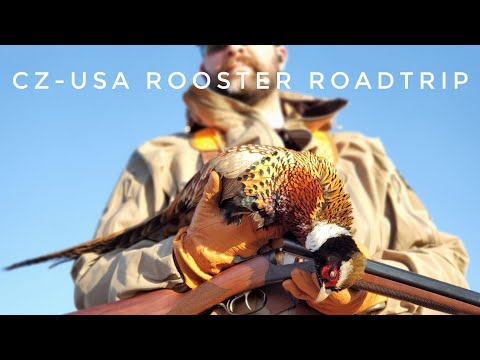 CZ-USA Kansas Rooster Road Trip - Pheasant And Quail Hunting