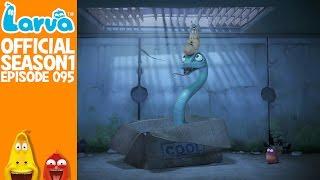 official whistle - larva season 1 episode 95