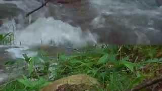 林の中の小道に沿って流れ落ちてくる川の水はいきよいよく神秘的な感じ...