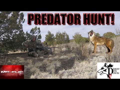 Predator Hunting Tournament Arizona ( We Got 3rd Place)