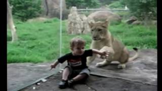 Животные нападают на детей! Интересное видео