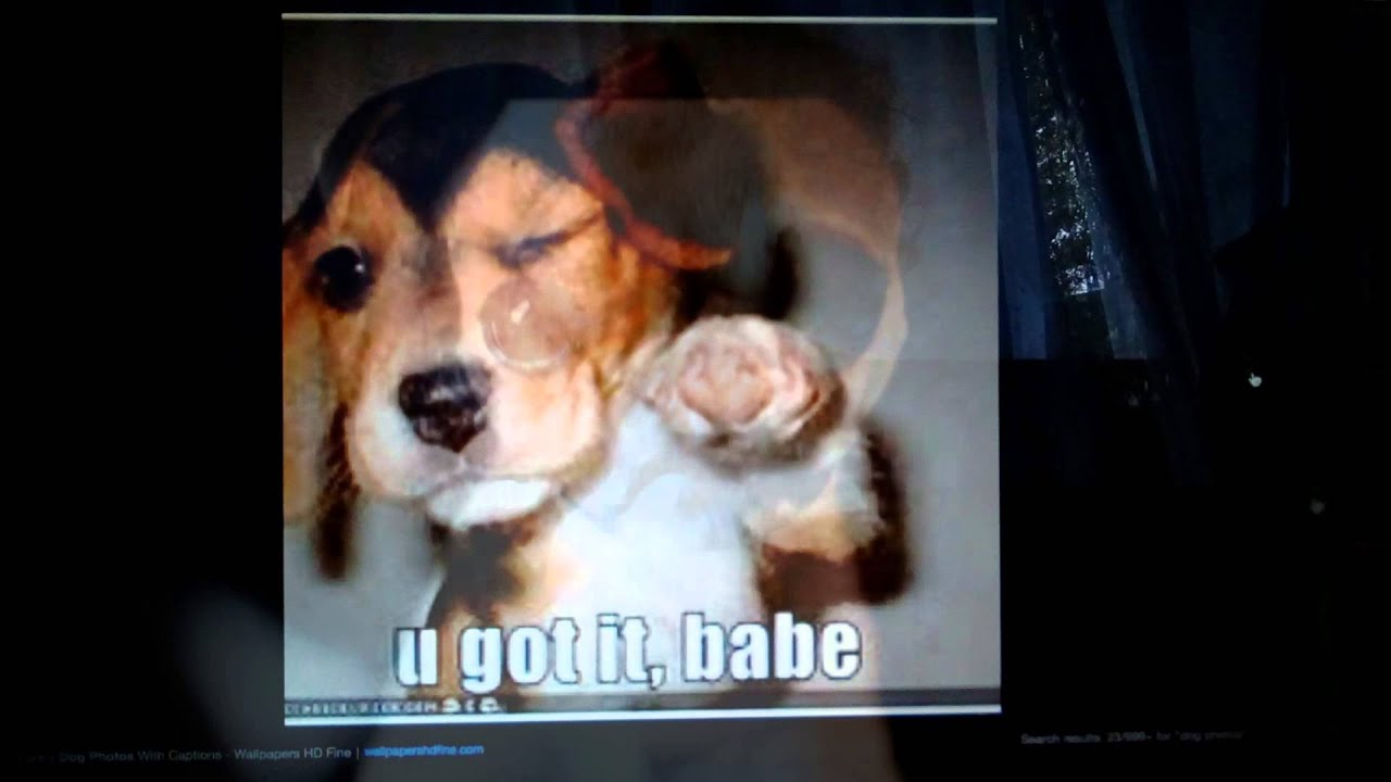 Sad Dog Videos That Make You Cry