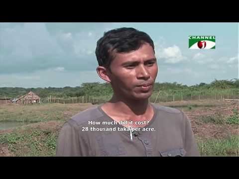 Bangladeshis show great success in fish farming in Uganda