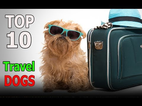Top 10 Dog Breeds To Travel With | Top 10 animals