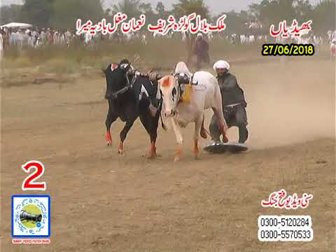 Bul Race In Pakistan Sunny Video Fateh Jang   27 06 2018 NO2