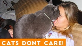 Download Cats Don't Care Funny Pets Videos | Best Funny Cat Videos Ever Mp3 and Videos
