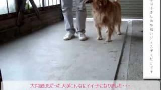 TVチャンピオン犬のしつけ手法 詳細はコチラまで→ http://sj.zz.tc/jj...