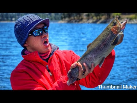 Fishing For Trophy Trout: Shaver Lake 2019