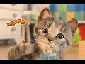Little Kitten - My Favorite Cat Part 2 - Best iPad app demo for kids - Ellie