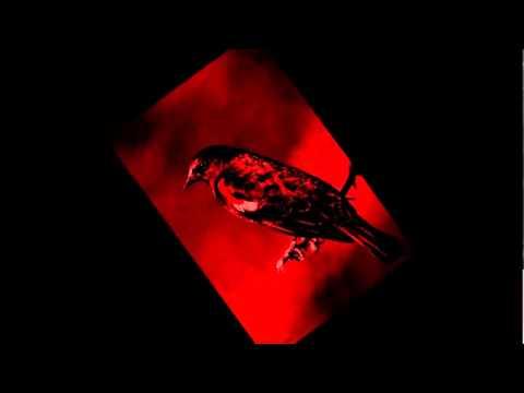Mannarino - Merlo Rosso