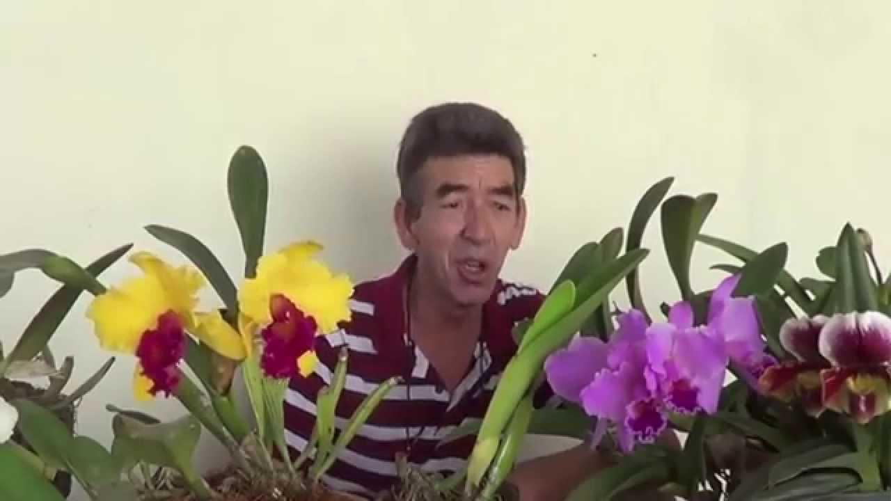Como cuidar de orquideas em casa youtube - Cuidar orquideas en casa ...