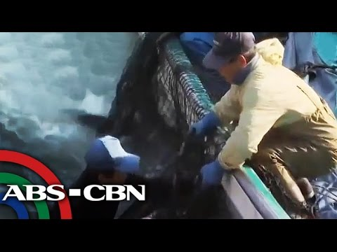 Pinoys protest against Japan's dolphin hunt