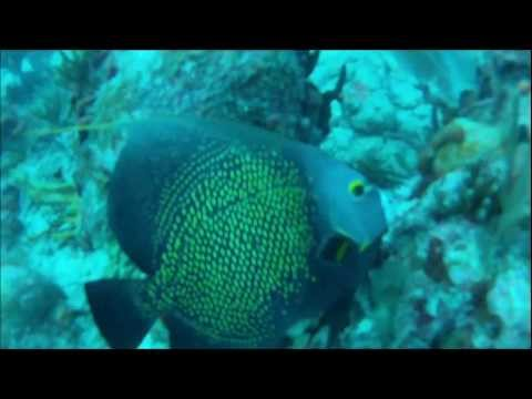 Caribbean Dive College: The Maze / Cable Reef